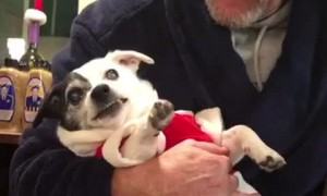 Dog Doesn't Like when Grandpa Touches her Paws