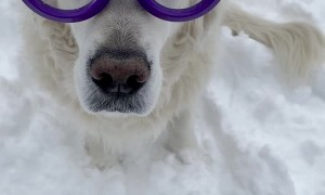 Glasses With Wipers Keep Pup is Ready to Play