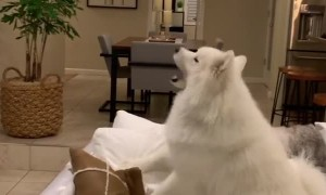 Dog reacts to mysterious UFO in the house