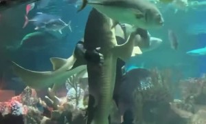 Scuba Diver Dances With Shark
