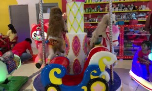 Pooches Play on Carousel