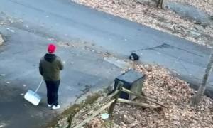 Black Bears Steal Snacks From Family Minivan