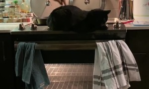 Poke the Cat to Turn on Oven Light