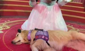 Service Dog Meets Minnie