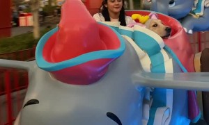 Riley the Service Dog Enjoys Amusement Park Ride