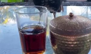 Bird Wants the Bourbon