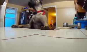 Dog Caught Banana Thieving