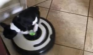 Bean Rides a Roomba