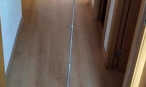 Robot Vacuum Carries Conductor's Stand