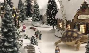 Tortoise Walking Through a Winter Wonderland