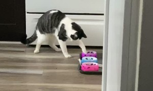 Kitty Eats Like a Raccoon