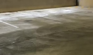 Frantic Deer Escapes Parking Garage