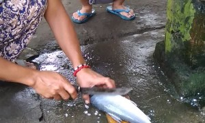 Kids Freaks Out Over Fish
