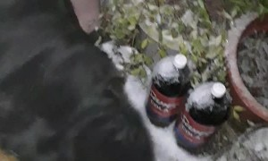 Doggo Peeks from Deep Snow during Outside Break