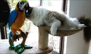 Cat meets