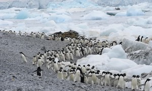 Time Lapse of Penguin Traffic