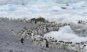 Time Lapse of Penguin Traffic