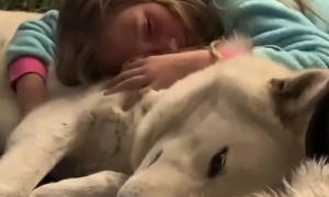 Bedtime snuggles between little girl and her gentle wolfdog