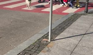Protective Pooch Helps Kids Cross