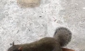 Trained Service Dog Keeps Calm to Curious Squirrel