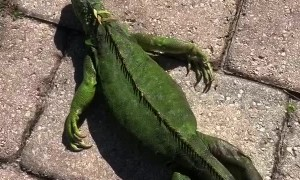 Warming up a Freezing Iguana