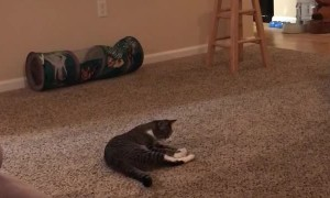 Cute Feline Loves Playing Fetch