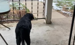 Playful Pooch Prepares to Pounce