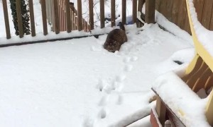 Cat Trying to Catch Snowballs
