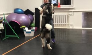 Sweet Dog Learns Dance Steps
