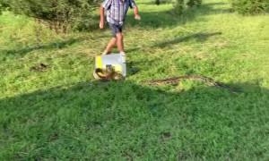 Southern African Python Strikes Handler