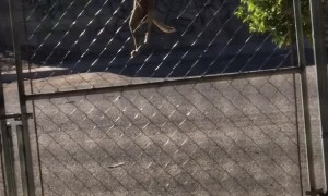 Smart Pup Scales Gate
