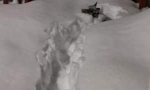 Short Dog Struggles in Deep Snow