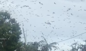 Rescue Chopper Failed to Land Due to Swarm of Bats