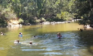 Cassowary Joins Family for a Swim
