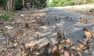 Feeding the Local Monkeys in Thailand