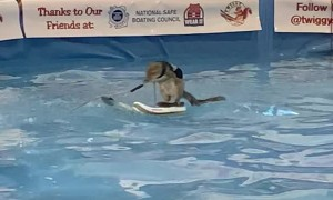 Twiggy, The Water Skiing Squirrel, Shows Off At the 2020 Toronto Boat Show