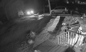 Man Attacked by Fox in Phippsburg