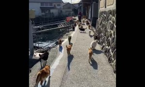 Clowder of Cats on Cat Island in Japan