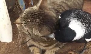 Patient Cat Tries to Tolerate Nosy Bird
