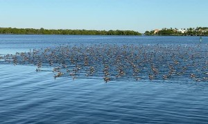 Massive Flock of Ducks Migrate above Kayaker