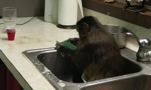 Monkey Keeping the Sink Clean