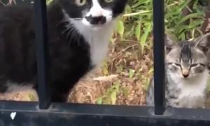 Cat's Nose Has Cat-Shaped Markings