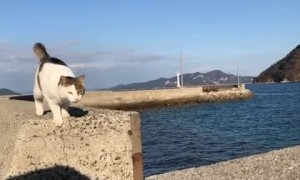Amazing cat makes an impressive Jump