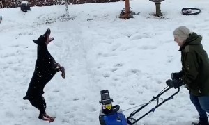 Dog Tries to Catch Every Single Snowflake