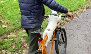 Pepper Goes for a Spin with Pappa