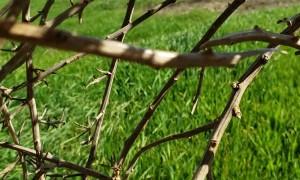 California Tumbleweed Rolls Away with Camera
