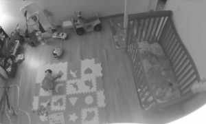 Pug Expending Energy in Empty Room