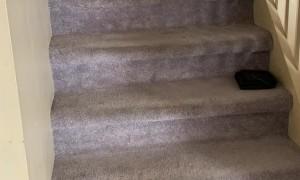 Doggo Plays Fetch With Himself