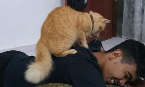 Cute Cat Gives Man a Shoulder Massage