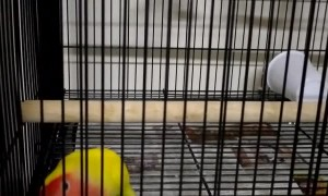 Clever Bird Escapes from Cage